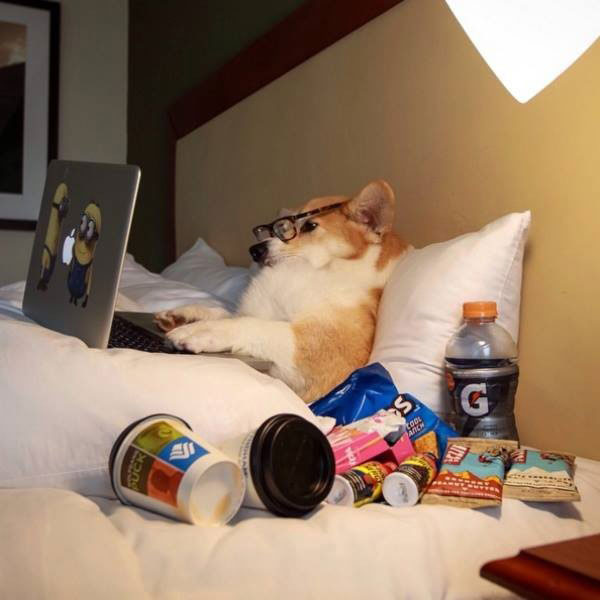 31 funny pics & Memes ~ dog person on laptop in bed