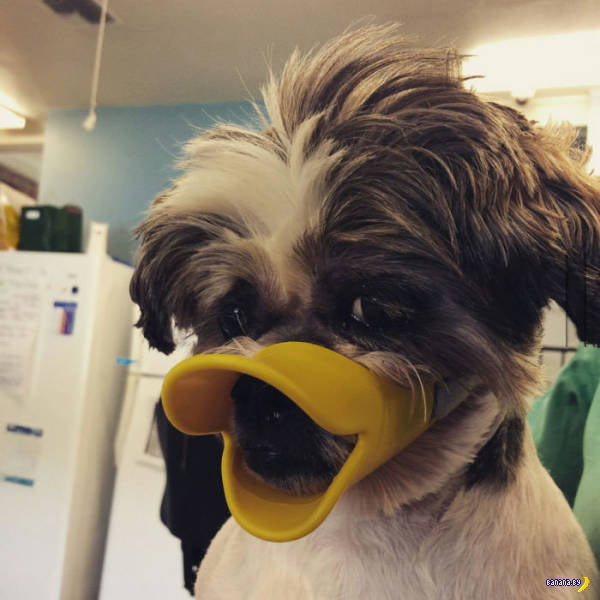 33 Funny Pics of the Day ~ dog duck lips