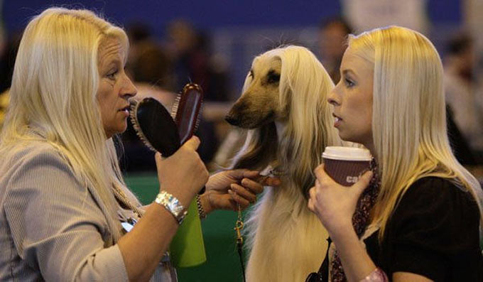 33 Funny Pics ~ Dog show blondes look alike