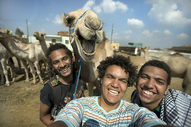 smiling camel photobomb ~ funny animals that take better pictures than you