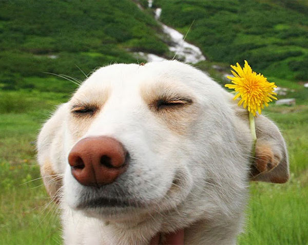 cool laid back dog with flower n ear ~ funny animals that take better pictures than you
