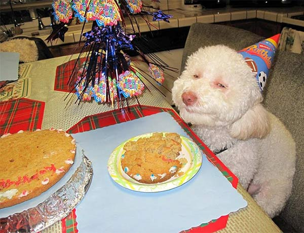 dog in birthday party hat ~ funny animals that take better pictures than you