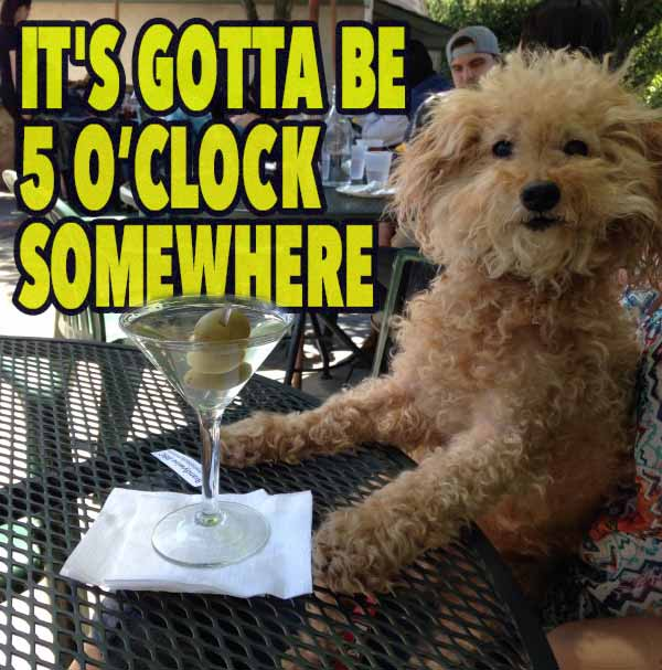35 Funny Pics ~ dog meme drinking at bar