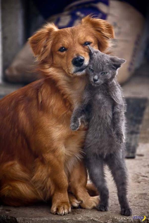 dog and cat cuddling ~ funny animals that take better pictures than you