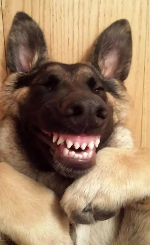 smiling dog ~ funny animals that take better pictures than you