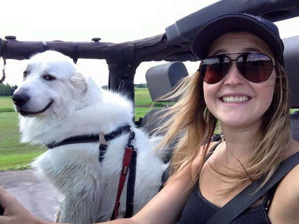 suave cool dog in jeep ~ funny animals that take better pictures than you