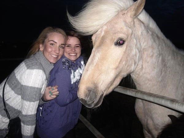 dapper horse with great hair ~ funny animals that take better pictures than you
