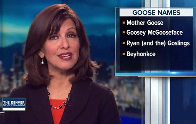 33 Funny Pictures ~ newscast goose names Beyhonkce
