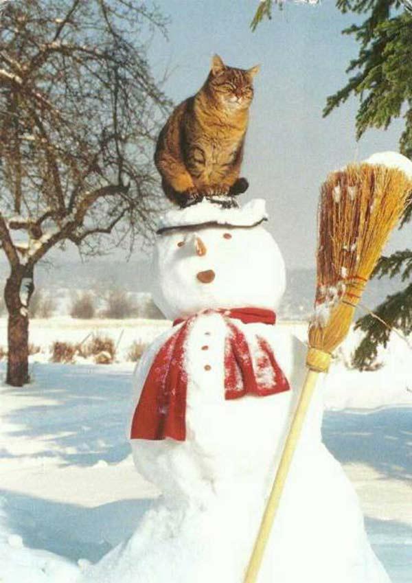 Funny Pics & Memes ~ cat sitting on snowman head