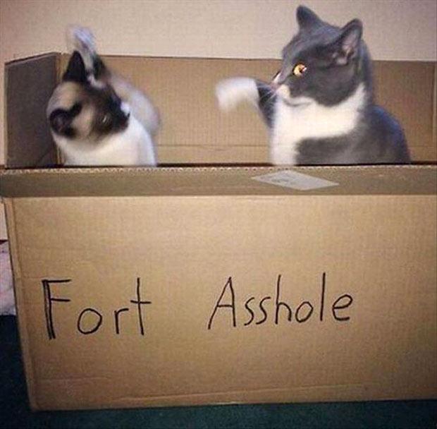 cat in box fort assholes Funny Pics & Memes ~