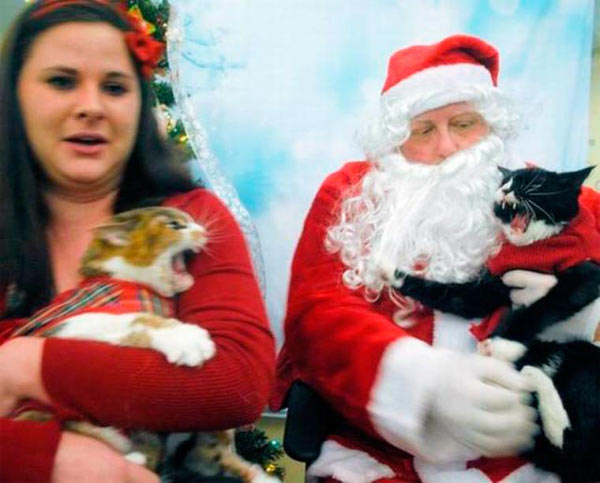 41 Funny Christmas Photos ~ cats fighting on Santa's lap