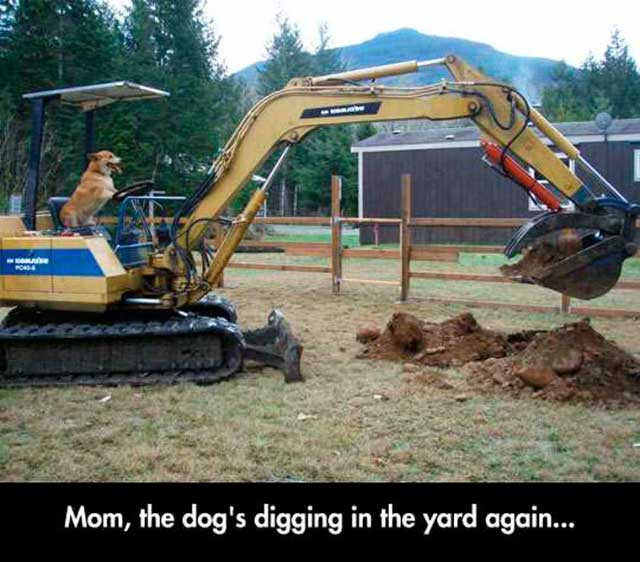 Funny Pics & Memes ~ dog digging in yard steam shovel