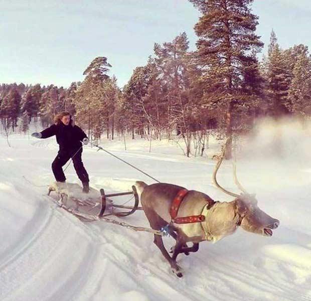 Funny Pics, Cool Stuff ~ Reindeer sledding surfing