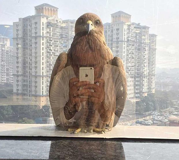 33 Funny Pics ~ cool shot reflection of eagle through window