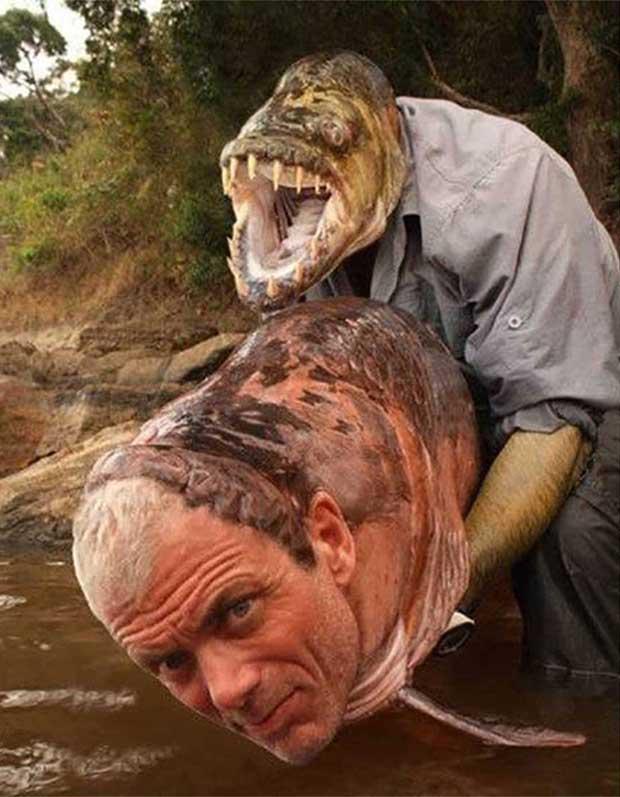 35 Funny Pics ~ creepy face swap man fish