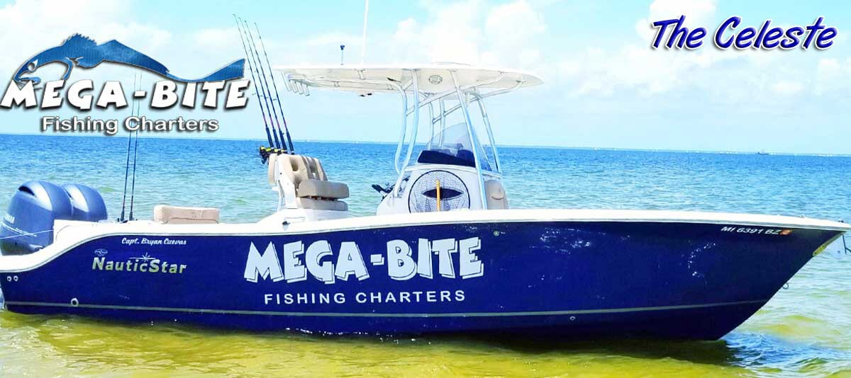 News For Biloxi Beach Closures Mega Bite Fishing Charters Llc