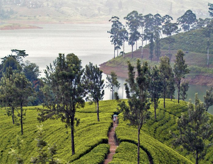 Terroir: Tasting Tea's Sense of Place