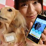 Collar de perro de Alta Tecnología 'inteligente' la venta A la venta en Japóncerca