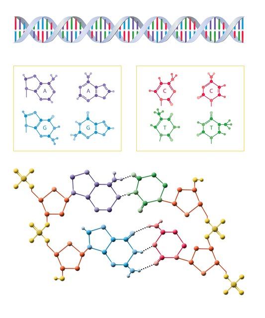 el mapa del genoma humano