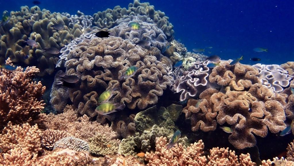 Snorkel this Underwater Paradise in Raja Ampat