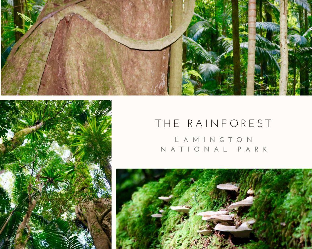 The Rainforest of Lamington National Park