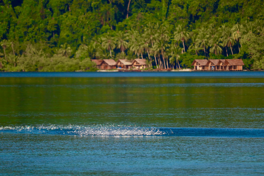 Papua Paradise is a Living Nature Documentary
