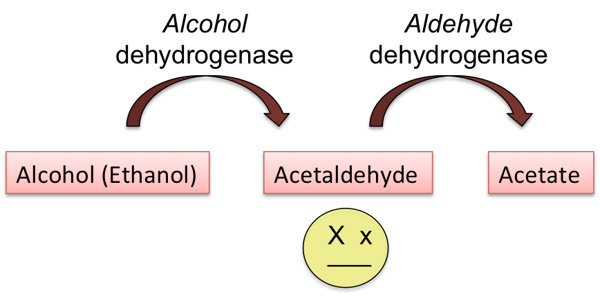 Consider, that enzyme asians alcohol