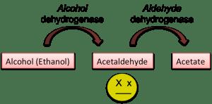 Alcohol metabolism asian glow