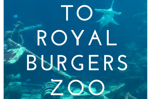 A visit to Royal Burgers Zoo