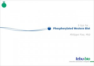 5 tips for Phosphorylated Western Blog Thumbnail