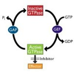 Small G Protein Activation