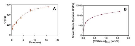 Figure 1. Rheometry experiments for shear elastic modulus (G') of hydrogel networks formed with Glycosil and Gelin-S at various ultraviolet light exposure times and substrate concentrations. [A] Time course with final concentration 0.2% w/v PEG norbornene and UV illumination for up to 15 min. [B] PEG norbornene dose response (final concentrations listed) with UV illumination for 3 minutes at each concentration.