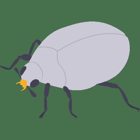 anti mites anthrenes de tapis