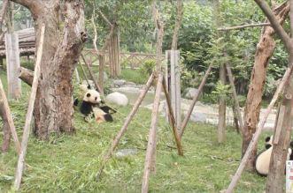 ستريت فيو في حديقة الحيوان