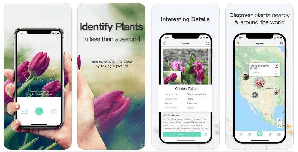 تطبيقPictureThis لمعرفة أنواع النبات والأشجار بواسطة الكاميرا