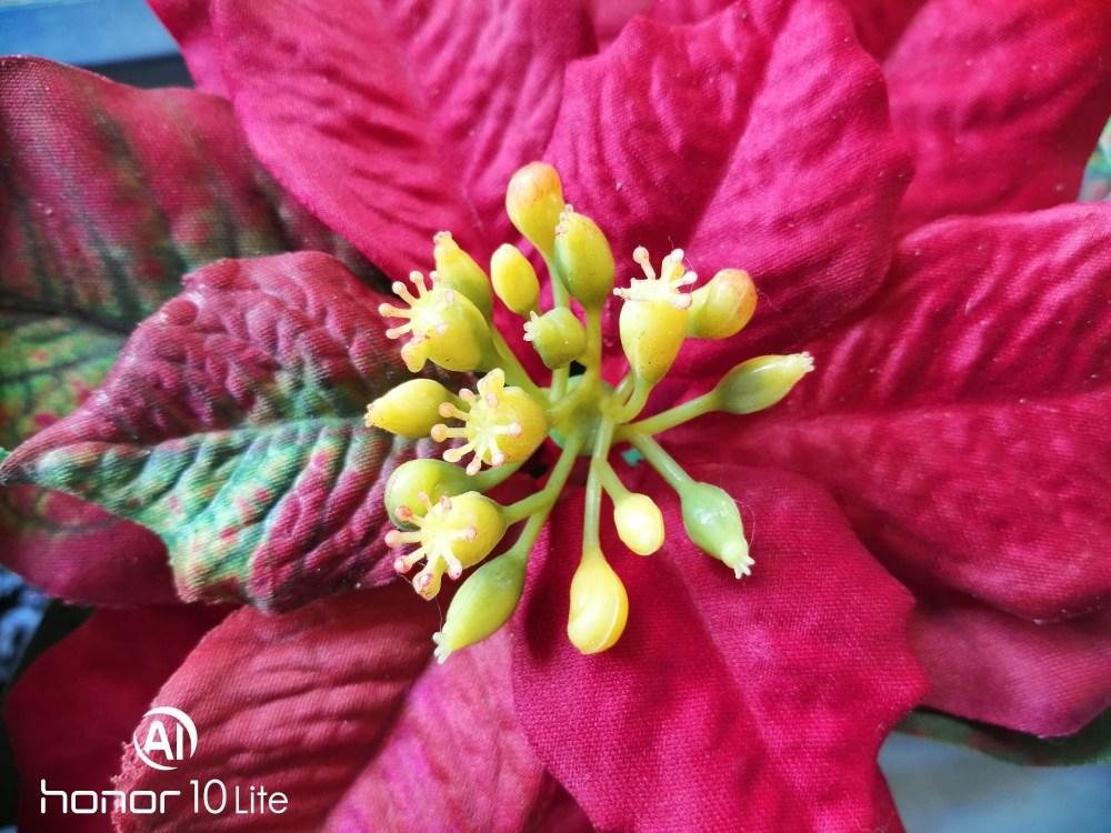 HONOR 10 Lite Photo Sample