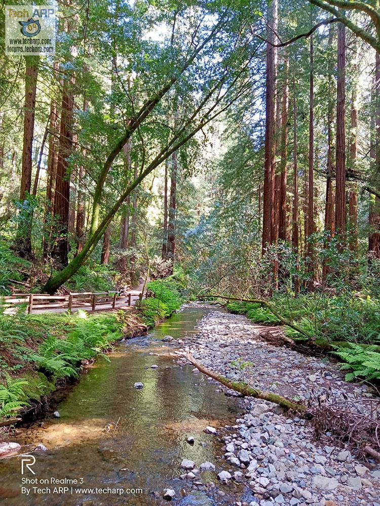Realme Chroma Boost Muir Woods sample