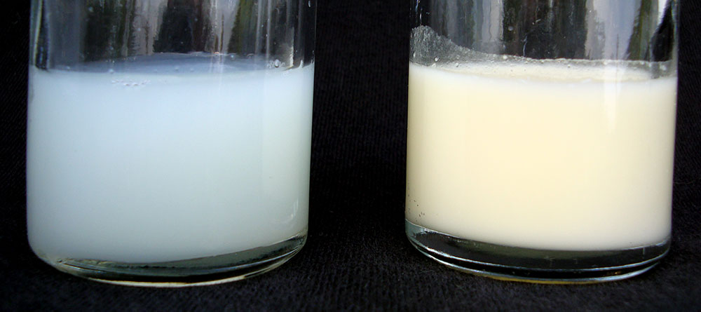 Foremilk vs Hindmilk