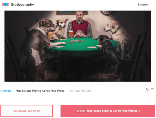 Free picture download - gratisography