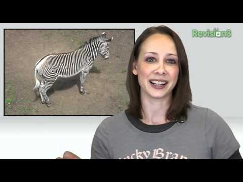 Tracking Zebras by Their Barcodes!