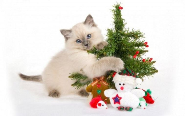 Cute Cat with Christmas Tree
