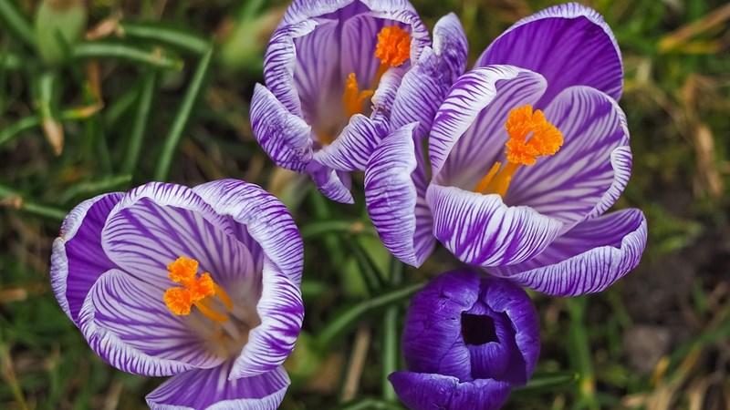 11 Nature Plant Flower Garden Flowers Grass