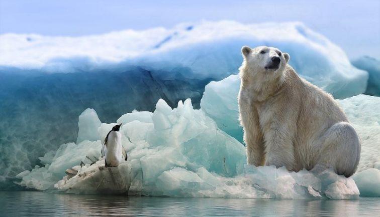 19 polar bear and penguin