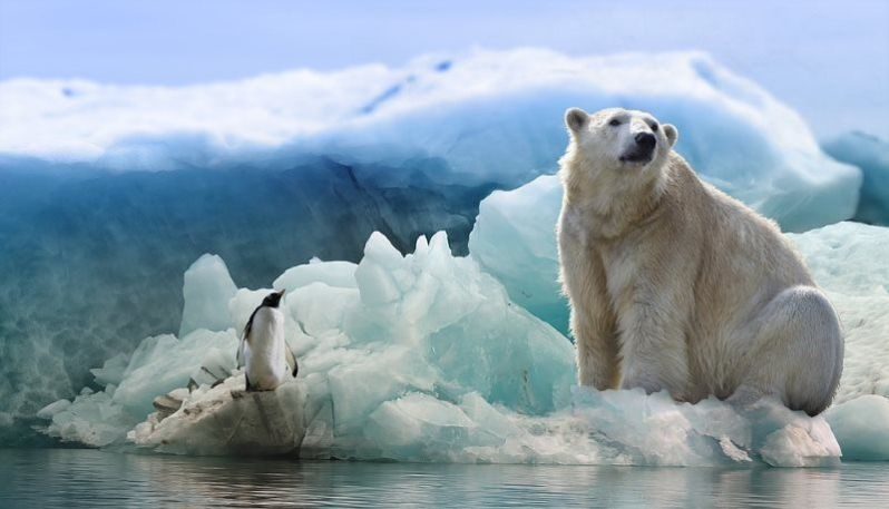 19 polar bear and penguin
