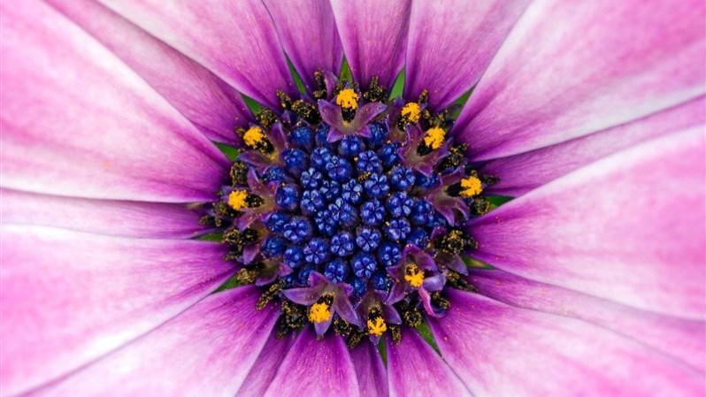 26 amazing purple flower