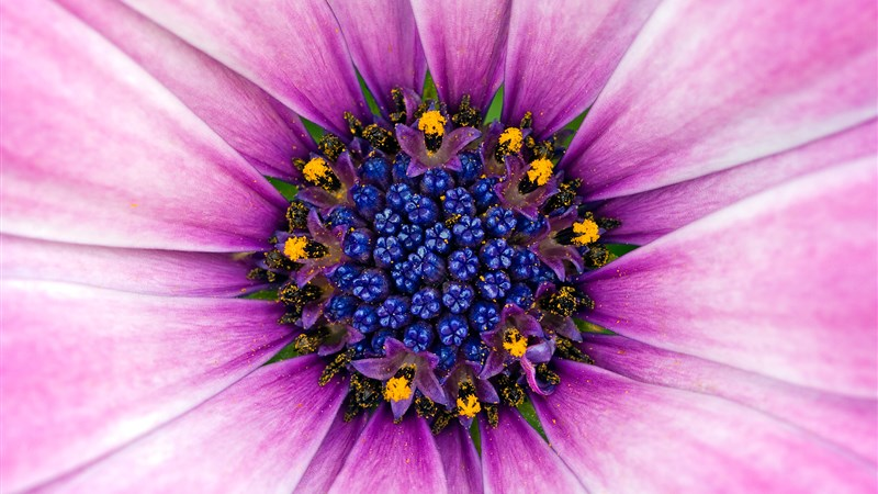 26 amazing purple flower