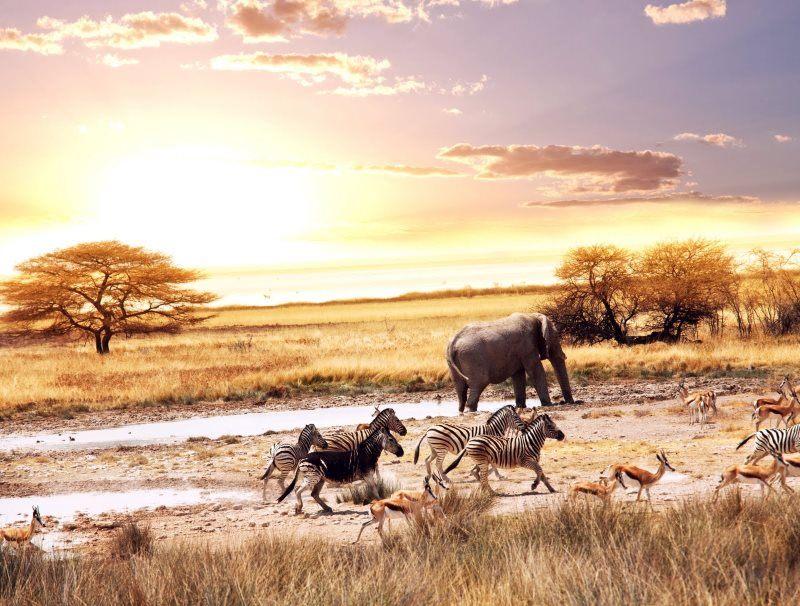 33 animals savannah africa escape danger fear