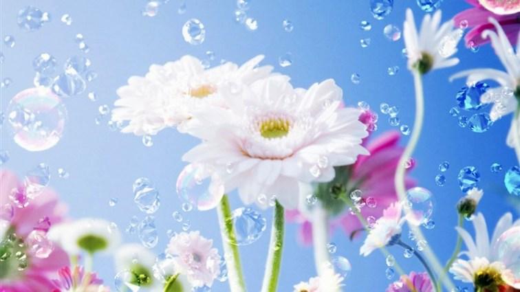 33 flower drops sky
