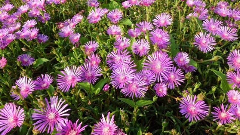 39 flowers bright flowerbed