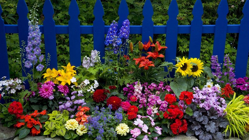 48 Earth Flower Fence Picket Fence Wallpaper